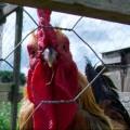 Avatar for Ingrid @ Jammy Chicken
