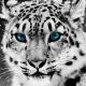 Eldarowyn's avatar