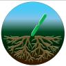 root-design
