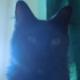 Mortvana's avatar