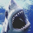 View shark4675's Profile