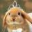 lisa1234 avatar image