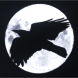 Midnight Crow Logo