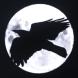 Midnight Crow Logo