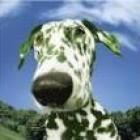 View Greendogo's Profile
