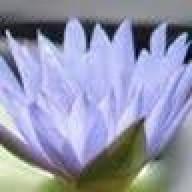 lotusflwr