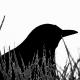 blackbyrd84