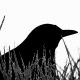Profile picture of blackbyrd84