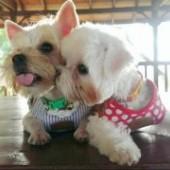 puppyfamily9