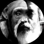 Evolving Ape
