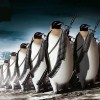PenguinForce
