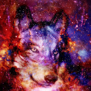 avatar for The Autistic Wolf