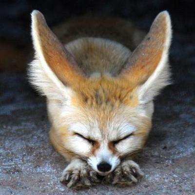 donbex