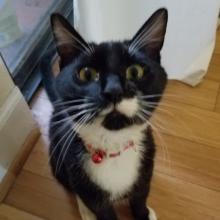 CatDad