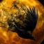 Blackpercher