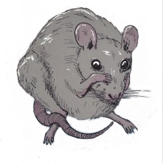 Frieda Rat