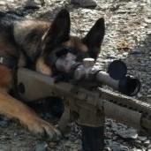 American Sniper Rifles: 5 of Chris Kyle's Favorite Sniper
