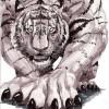 Sneakytiger's avatar