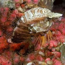 Avatar for deepwaterdivernw from gravatar.com