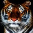Tiger_273