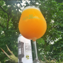 houston-neipa-one-year-later
