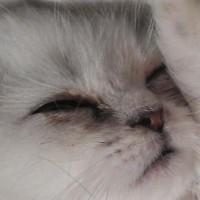 Jimmie_Felidae
