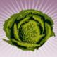 morecabbage