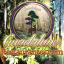 Guadalupe Restaurantes Administración