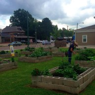 Community Table Garden