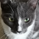 Wendy Onizak