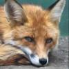 iFOXя avatar