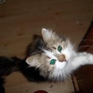 kittythehare