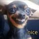 Profile picture of flatdog7@gmail.com