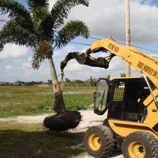 Stumpman Tree Service
