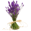 lavendellied
