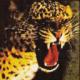 El Tigre de Vallekas