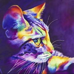 tomcat13