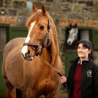Emma-Rose, Euro Stallions (Ireland) Ltd