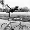 BikeriderisFresh