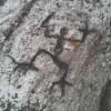 Anna Maria Sganga Forero