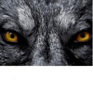 Wolfschiesst