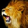 Leolph's avatar