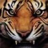 TigerHeart's Photo