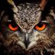 owl1955