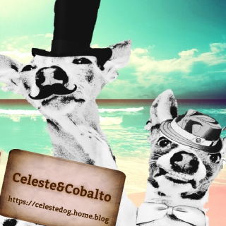 チェレステ&コバルト