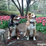 Avatar of singing dogs