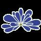chantillylace