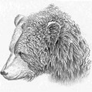 Bear Limvere