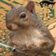 Squirrel61