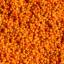 Spincervino